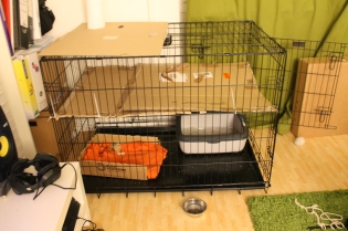 We had to modify the cage a bit, so Lovis can´t climb up and jump.